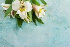 Lilie weiß und gelb auf Blau Lizenzfreie Stockfotografie