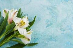 Lilie weiß und gelb auf Blau Stockfoto