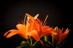 Lilien auf einem schwarzen Hintergrund Stockbild