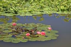 Lilien-Auflage Lizenzfreies Stockfoto