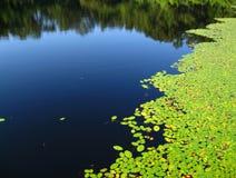 Lilien-Auflagen auf einem Teich stockfotografie