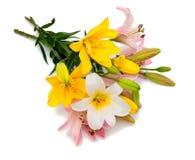 Lilien der unterschiedlichen Farbe Stockbild
