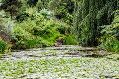 Lilien im üppigen grünen Garten Stockfoto