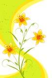 Lilien mit Streifen Stockbilder