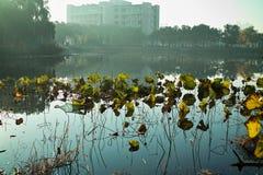 Lilien-Teich Stockfoto