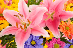 Lilien und Gänseblümchen Lizenzfreie Stockfotografie