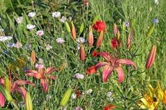 Lilien- und Mischungsblumen im Blumenbeet Hintergrund, schön, Blatt Stockfoto
