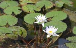 Lilienauflagen mit Blumen Stockbild