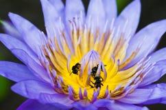 Lilienblume Lizenzfreie Stockfotos