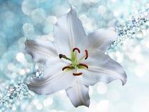 Lilienblume auf blauem Hintergrund mit bokeh Effekten Lizenzfreie Stockbilder
