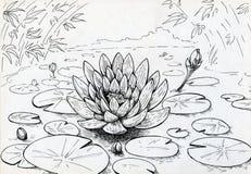Lilienblume auf dem überfluteten Teich stock abbildung