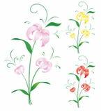 Lilienblumen vektor abbildung