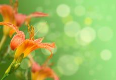 Lilienblumen mit dem Hintergrund Lizenzfreies Stockbild