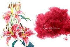 Liliengrußkartenschablone Stockfoto
