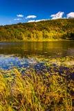 Lilienhülsen und ein Teich im Acadia-Nationalpark, Maine Lizenzfreies Stockfoto