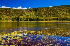 Lilienhülsen und ein Teich im Acadia-Nationalpark, Maine Lizenzfreie Stockfotografie