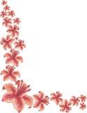 Lilienhintergrund Stockfotografie