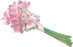 Lilies. A bunch of pretty pink lily flowers together with an elegant ribbon Stock Images