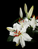 Lilies. Bunch of white lillies popular at weddings and funerals, isolated on a black background Stock Images