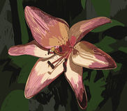 Lilies. Cute wallpaper with lily. nature background Royalty Free Stock Photos