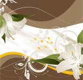 Lilies abstraction Royalty Free Stock Images