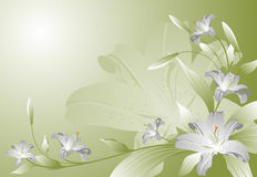 Lilies abstraction Royalty Free Stock Photos
