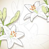 Lilies, background Stock Photo