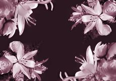 Lilies background Royalty Free Stock Photos