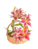 Lilies in a basket Royalty Free Stock Image