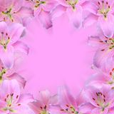 Lilies. Blurred background with lily frame Stock Images
