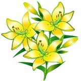 Lilies. A branch of lilies with buds. Yellow flowers vector illustration