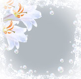 Lilies and bubbles Royalty Free Stock Photos