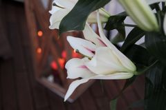 Lilies. Candles Royalty Free Stock Photos