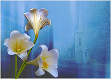 Lilies and Church. Three lilies  in front of window with a church in the background Royalty Free Stock Photo