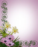 Lilies and Daisies Floral Background. Image and illustration composition of Purple or Lavender daisies and white lilies for background, wedding invitation or Stock Images