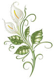 Lilies, flowers, calla lilies. White flowers, colorful white lilies Royalty Free Stock Photos