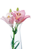 Lilies in a glass vase Stock Photos