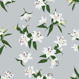 Lilies grey seamless vector background Royalty Free Stock Photography