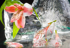 Lilies with ice Royalty Free Stock Images