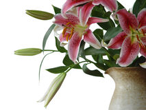 Lilies in a jug. Pink lilies in a jug on a white background Stock Photos