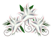 Lilies Stock Images