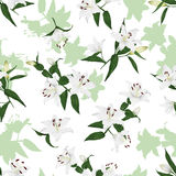 Lilies natural seamless vector background Royalty Free Stock Photo