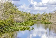 Lilies and sawgrass growing on a waterway in the Everglades National Park in Florida, USA. Everglades National Park is a U.S. National Park in Florida that Royalty Free Stock Photos