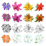 Lilies set (different styles drawn) royalty free illustration