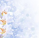 Lilies and stars. White lilies, shiny stars and bubbles Royalty Free Stock Photos