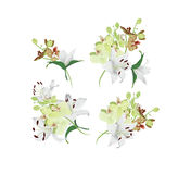 Lilies and tiger orchids bouquet vector design elements Royalty Free Stock Photo