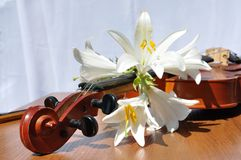 Lilies to rest upon violin Stock Photos