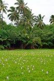 Lilies on the tropical lake in Hawaii Big Island stock photo