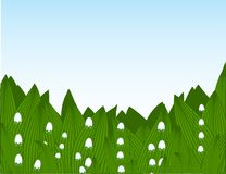 Lilies-of-the-valley. Background with the lilies of the valley and sky Vector Illustration