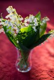 Lilies of the valley in the back light, Boquet. Flora royalty free stock photography